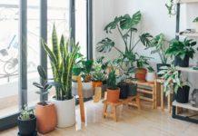PNW Home Design