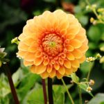 Flowers That Thrive in Pacific Northwest Gardens