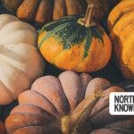 Seattle Metro Weekend Planner: October 22-25, 2020